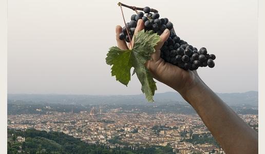 Bibi Graez panorama cantina su Firenze