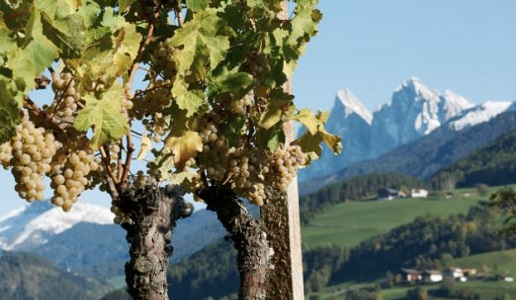 Valle Isarco Alto Adige Vigna