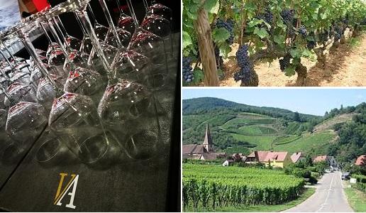 Anteprima Vin d'Alsace Pinot Noir Andrea Zarattini DoctorWine