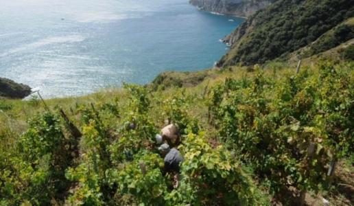 antonio mazzella villa campagnano ischia bianco superiore 2017