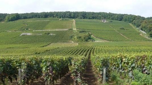 Borgogna Grandi Firme (1): alcuni grandi interpreti dello Chardonnay