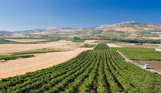 cva canicattì cantina vini vigneto sicilia nero d'avola centuno doctorwine
