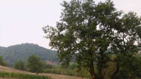 cantina dryas brut metodo classico grande quercia