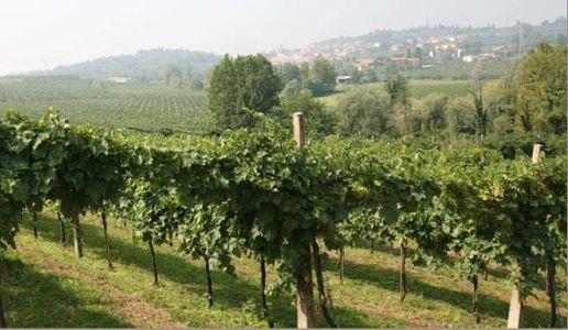 cantina gorgo vini custoza veneto san michelin