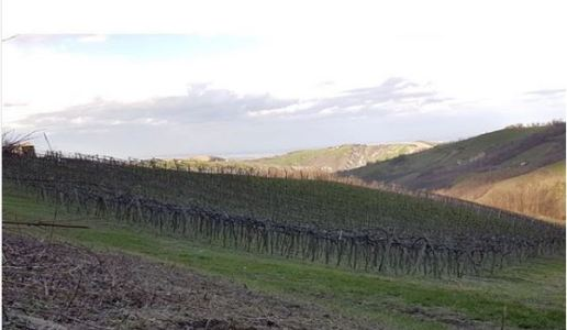 cantina della volta lambrusco di modena trentasei vino spumante emilia romagna vigneti