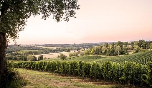 Côtes de Gascogne Fossiles n°6 2019 Domaine Haut Marin
