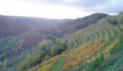 domaine mousset cantina vini francia panorama vigneti la pauca 2014