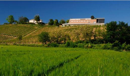 fattoria la valentina cantina vini abruzzo spelt riserva montepulciano 2014