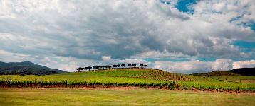 """Il Consorzio Vini Maremma Toscana """"goes social"""""""