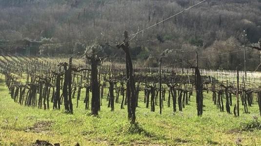 Il lato terragno della Campania, il Sannio Beneventano