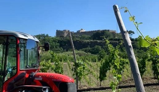 La Sibilla Vigneto Castello Aragonese Baia