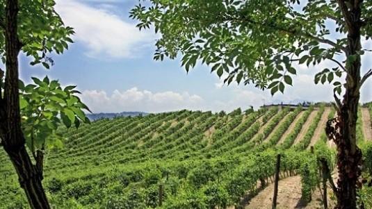 La straordinaria certezza dei vini Calafè