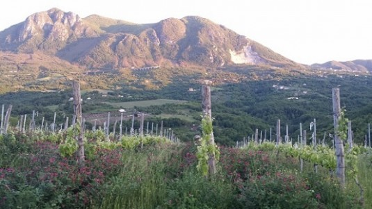 Lapio Wine Tasting (1): Taurasi