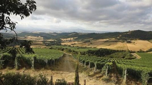The many interpretations of the Maremma appellation