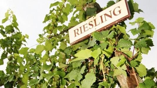 Mitico Riesling (1): una premessa
