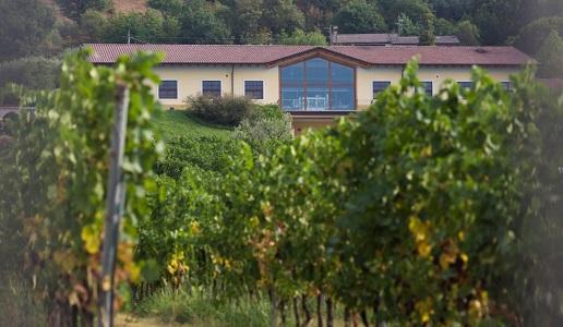 Monte Zovo Famiglia Cottini Cantina di Capriva