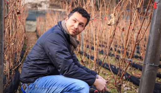 Nicola Blasi Vin de la neu
