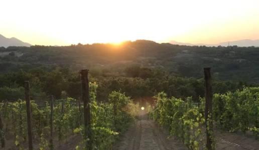 nolure cantina vini campania vigneti avellino aglianico