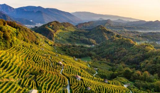 SITO UNESCO COLLINE DEL PROSECCO: IL FUTURO AD UN ANNO DAL RICONOSCIMENTO