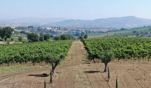 Passo delle Tortore cantina vini Campania Irpinia vigneti