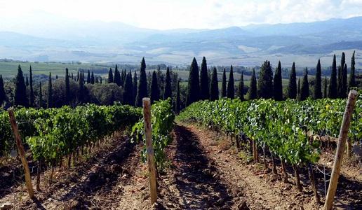 Podere giodo Montalcino vigneti