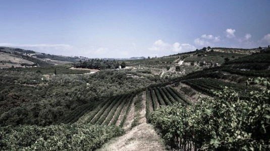 Realtà vitivinicola impressionante