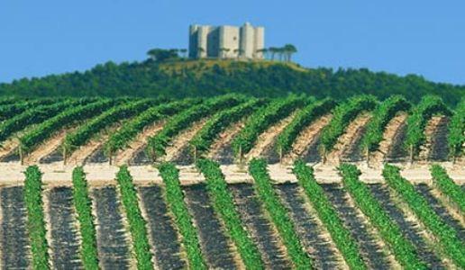Rivera Castel del Monte Vigneti Cappellaccio Riserva 2008
