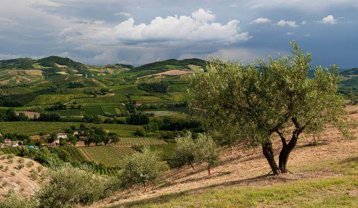 Romagna Vigneti