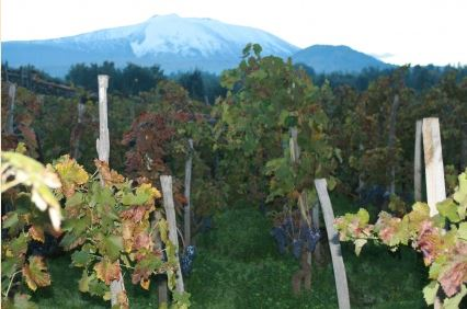 Salvo Foti, l'Etna Rosso Vinupetra e I Vigneri