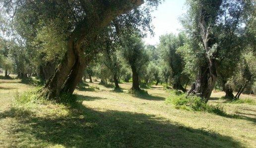 sorelle garzo dolciterre ottobratico olio frantoio calabria ulivi