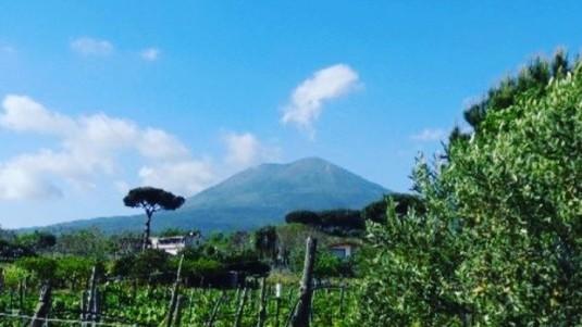 Stile Italiano: Lacryma Christi del Vesuvio Cantine Matrone