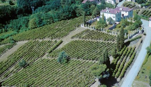 tenute sella cantina vini piemonte panorama vigneti lessona