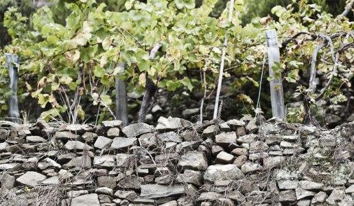terenzuola muri a secco vigne cantina vini toscana merla della miniera canaiolo