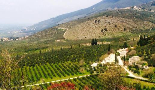 villa della genga le terre di poreta olio extravergine d'oliva biologico frantoio castello panorama