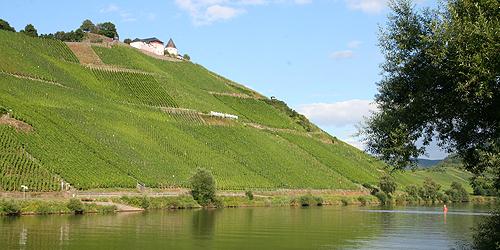 Vini dolci (7): Germania, Spätlese e Auslese