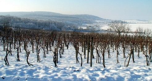 Vini dolci (9): dolcissima Germania #2