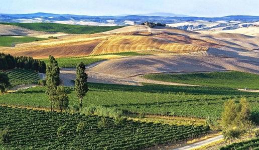 Su un totale di 59mila ettari vitati in Toscana 16.720 sono bio e biodinamici