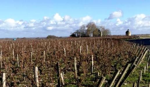 chateau latour cantina vini francia vigneti bourdeaux pauillac grand vin