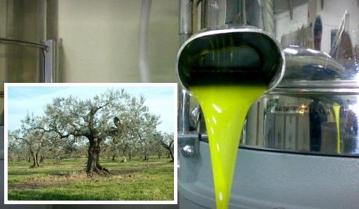 la selvotta olio extra vergine d'oliva electum abruzzo