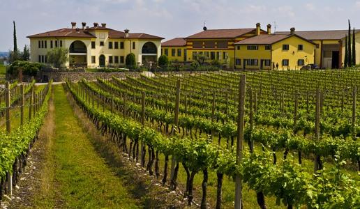 monte del fra custoza vino bianco vigneti