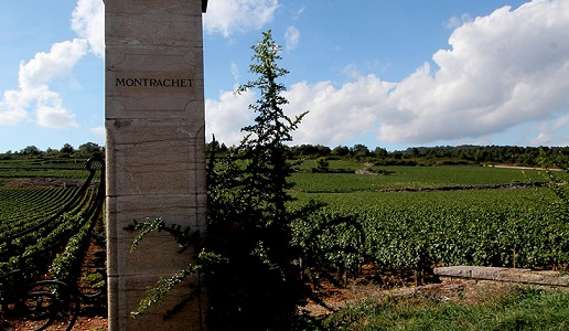 Montrachet panorama vigneti