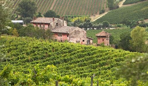Romagna vini vigneti