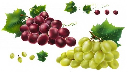 vendemmia 2019, prezzi uve da vino