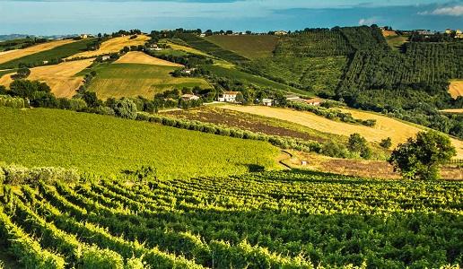 vigne mario lucchetti