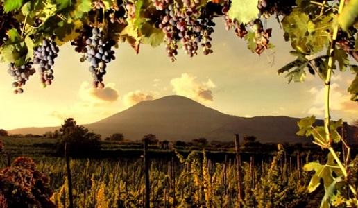 Amarcord Campania Felix (2): Bianchi e Aglianico in purezza