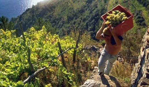 Il prezzo del vino viticoltura eroica
