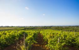 Augustali: una fattoria interdisciplinare