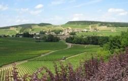 Borgogna Grandi Firme (3): parliamo di rossi