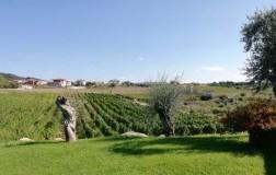 Cantina Dessena panorama vigneti Sardegna