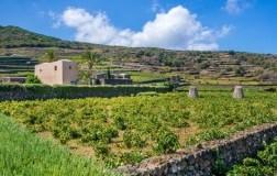 Cantina Donnafugata pantelleria